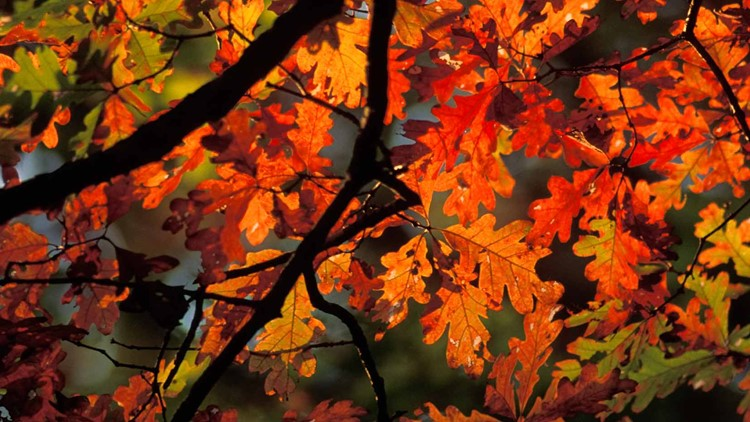 Fall foliage forecast: Here's when we could see colors peak in St. Louis