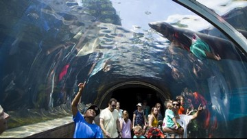 There are only a few days left to help the Saint Louis Zoo be named best in the US