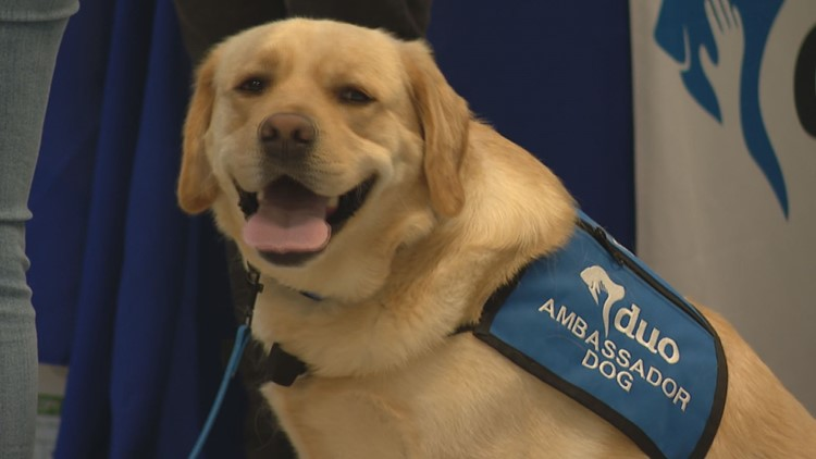 Blues team dog Barclay graduates from Duo Dogs training
