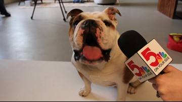 Dogs with Jobs: Meet Meatball