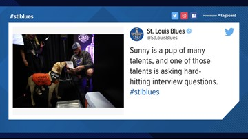 'Today' dog Sunny stars at Cup Final media day