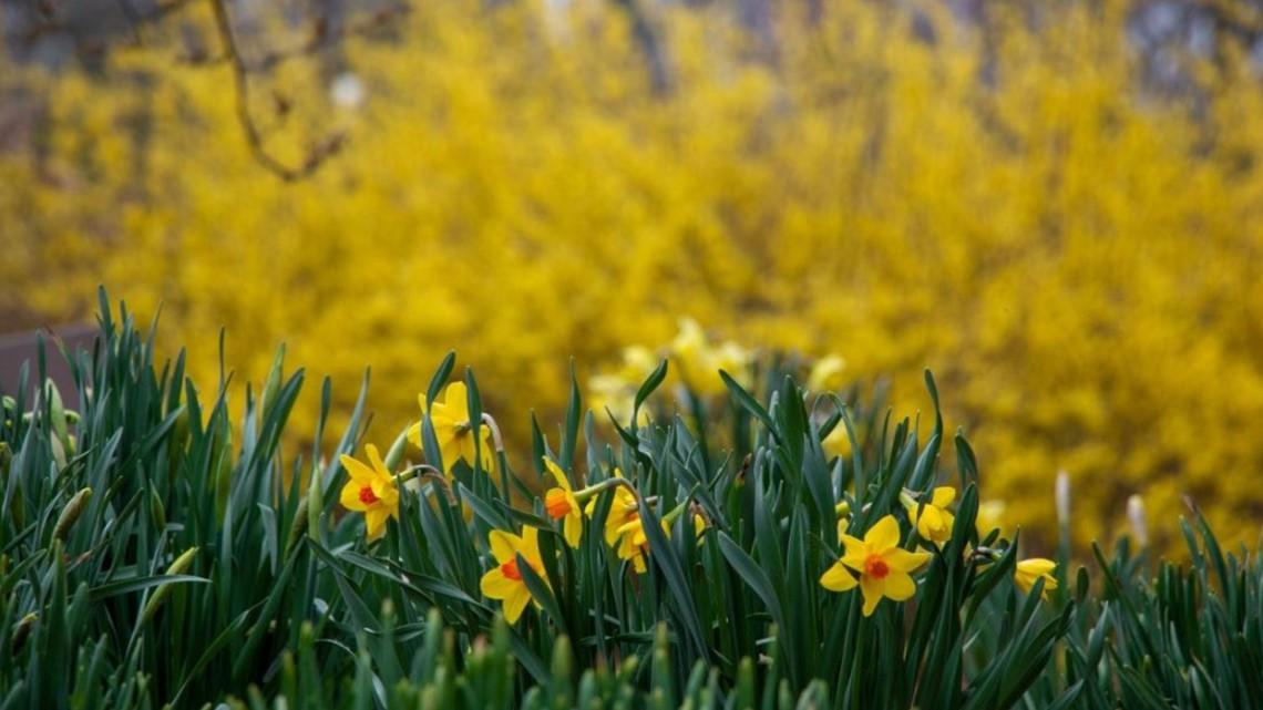 Missouri Botanical Garden to reopen on June 16