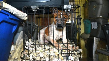 41 dogs and cats rescued from hoarding situation, owner arrested in Bates County, Mo.