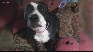 Driver wanted for abandoning dog