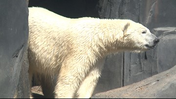 Beers, bears and fall fun at the Saint Louis Zoo for Zootoberfest