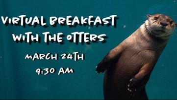 Need an otterly adorable distraction? Have a virtual breakfast with 3 otters Tuesday morning