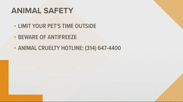 Tips to keep your pet safe in freezing temperatures