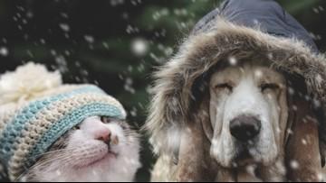 If it's too cold for you, it's too cold for your pets