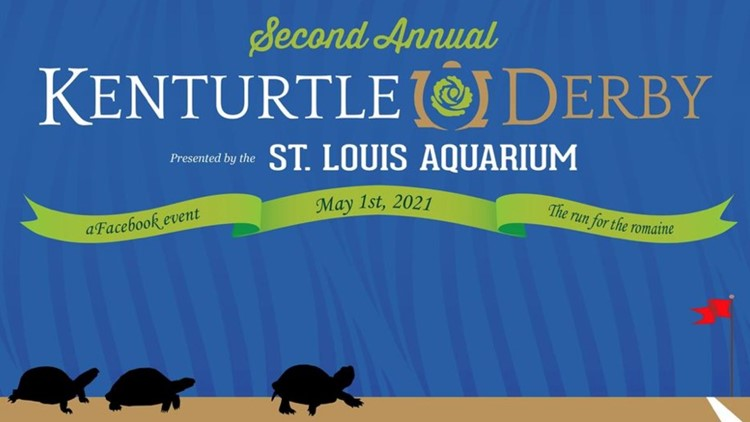 2nd annual KenTurtle Derby nearing post time at St. Louis Aquarium
