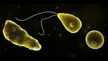 Why 'brain-eating' amoeba found in freshwater lakes – while rare – is so deadly