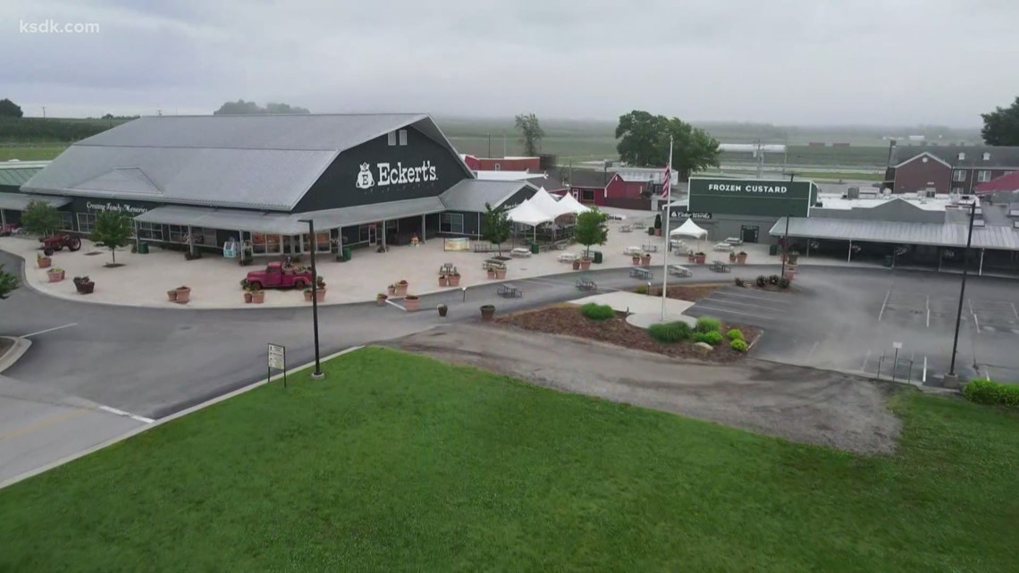Rare black raspberry crop available for just 1 day at Eckert's in Belleville