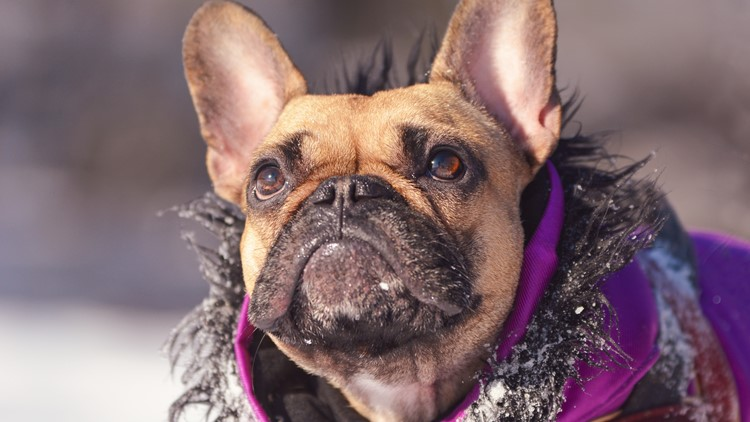 Tips for keeping your pet safe in cold weather