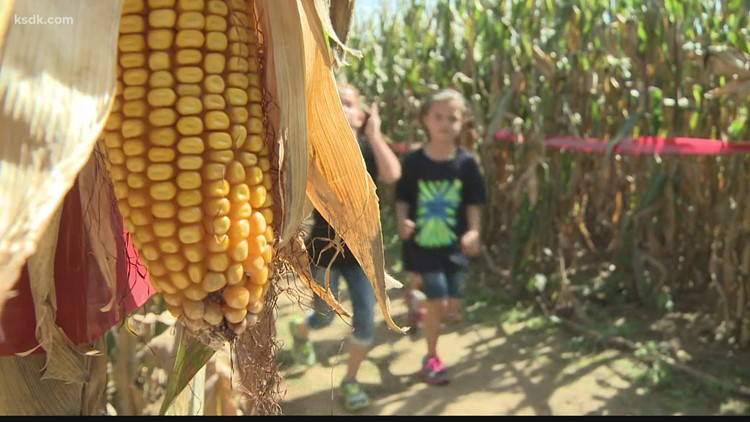Eckert's Farm wants you to design their next corn maze