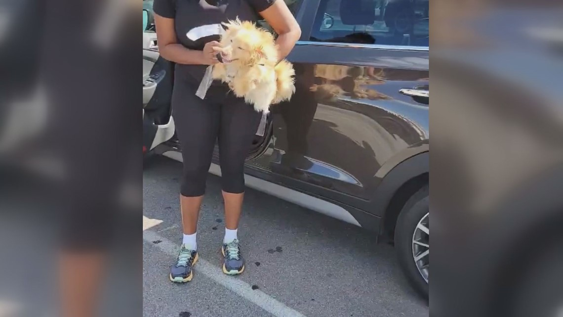 Woman finds 2 dogs duct-taped inside hot car in south St. Louis parking lot