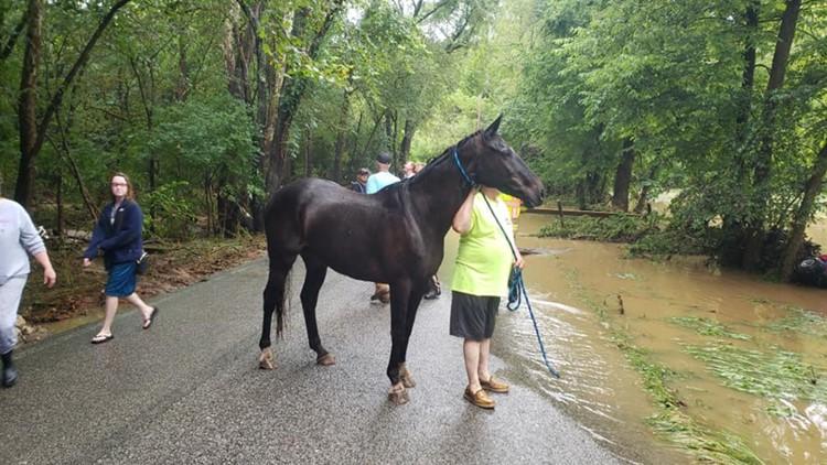 horse rescue eureka flash flooding
