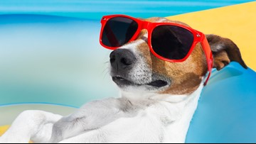 Take your dog for a swim at these St. Louis area pools