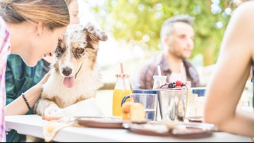 Grab a bite to eat with your pup in Forest Park