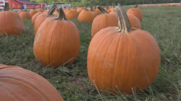 Things to do this fall in the St. Louis area
