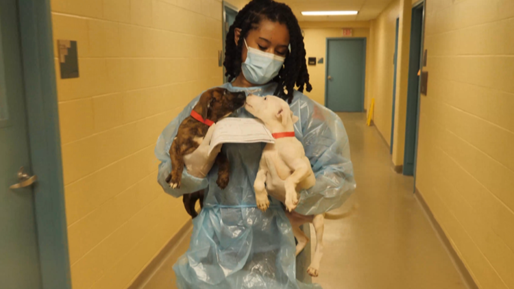 37 dogs, puppies rescued after Hurricane Ida in Louisiana arrive in St. Louis