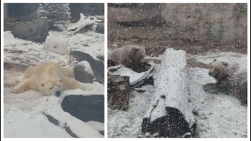 Kali, Huck and Finley are loving the snow at the St. Louis Zoo
