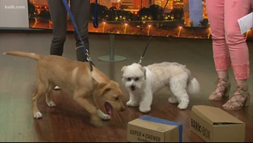 Try It Tuesday: Producer dogs give BarkBox a sniff