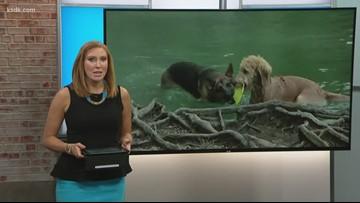 Blue-green algae killing dogs
