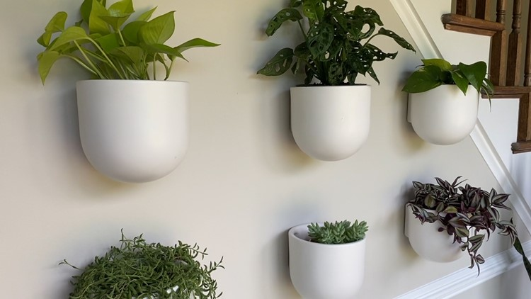 How to find the right plants for your home