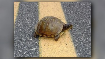 Hey, slow down and give this turtle and his buddies a break