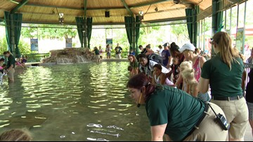 Dress like a shark, get into the Saint Louis Zoo's stingray exhibit for free
