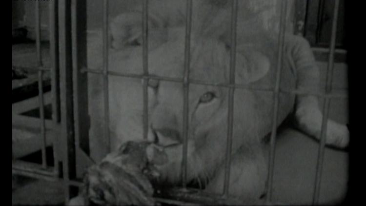 The time a labor strike shut down the zoo