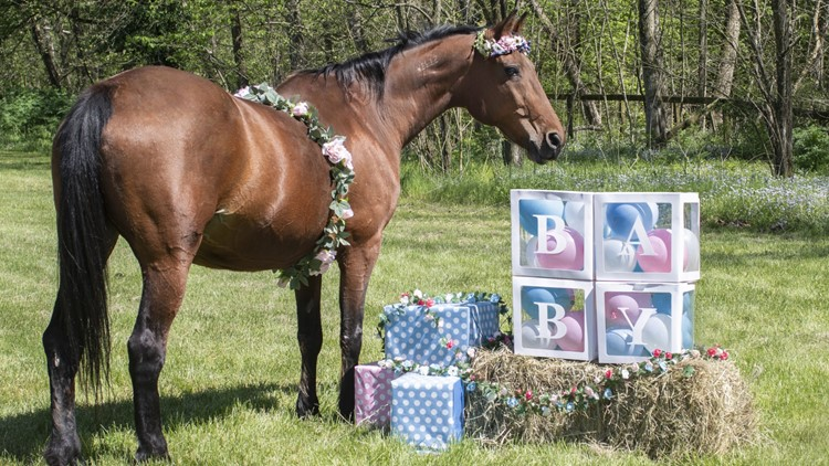 Horse who survived horrific I-44 trailer wreck to give birth