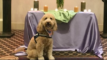 St. Louis area funeral home uses dog to comfort grieving families