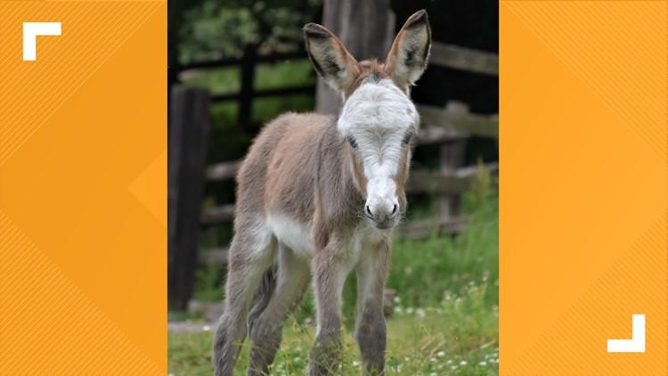 Duchess of Cornwall names donkey Sweet Pea