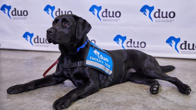 Mercy Hospital South welcomes a 4-legged worker