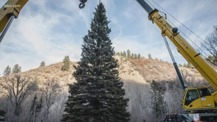 Capitol Christmas tree to stop in Knoxville
