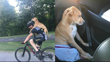 Cyclist finds injured dog and carries him on his bike into town