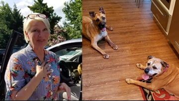 Woman walks into NC humane society, asks for 2 dogs who've been there longest with special needs