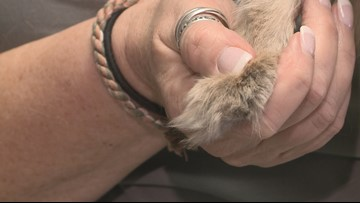 Opinions differ on cat declawing ban