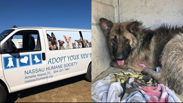 Help is en route to rescue German Shepherds found in 'extremely neglectful conditions'