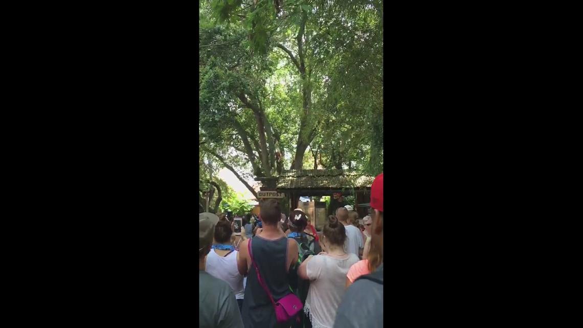 Orangutan escape at Busch Gardens | ksdk.com