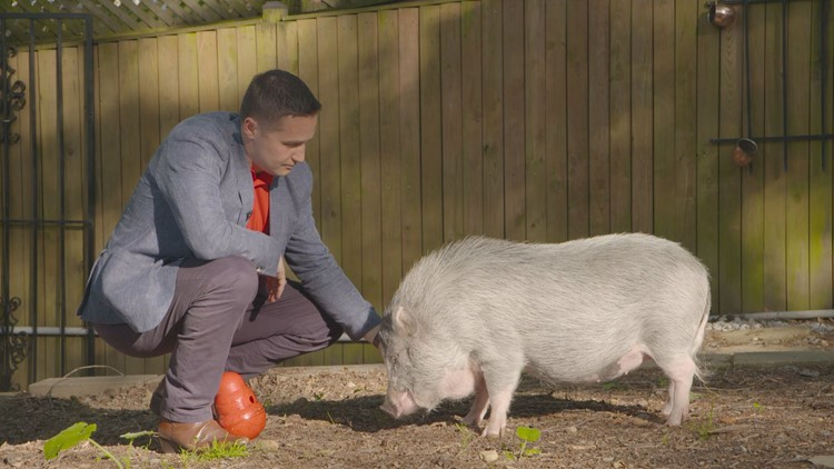 Dr. Will McCauley and his pet potbelly pig