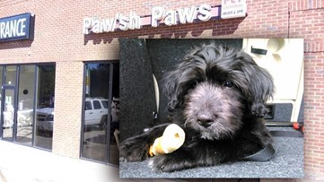 The dog was dropped off at the groomer. By the end of the day, he was dead